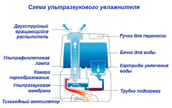 Ультразвуковой прибор в разрезе